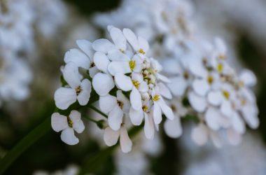 Garden-Ology